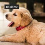 3 gode råd til dig med en ny hund